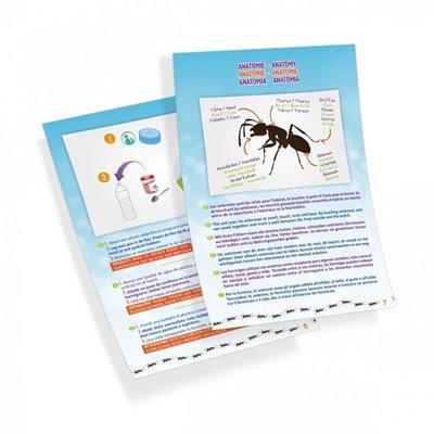 קן גידול לנמלים
